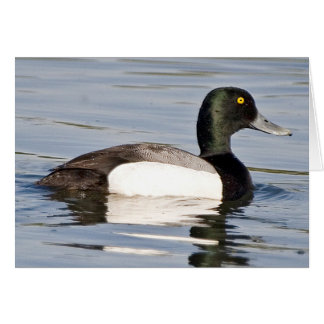 Greater Scaup - Bluebill Drake Card