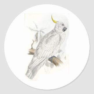 Greater Sulphur-Crested Cockatoo by Edward Lear Classic Round Sticker