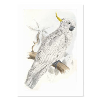 Greater Sulphur-Crested Cockatoo by Edward Lear Large Business Card