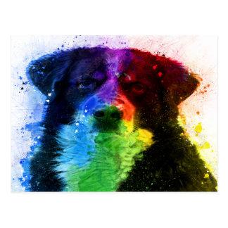 Greater Swiss /Bernese Mountain Dog Color Block Postcard
