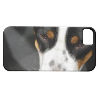 greater-swiss-mountain-dog-1.jpg iPhone 5 fundas