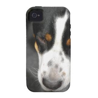 greater-swiss-mountain-dog-1.jpg vibe iPhone 4 carcasas
