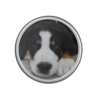 Greater Swiss Mountain Dog Bumpster Speaker