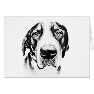 Greater Swiss Mountain Dog Card