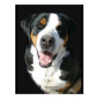 Greater Swiss Mountain Dog: Happy Postcard