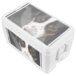 Greater Swiss Mountain Dog Ice Chest