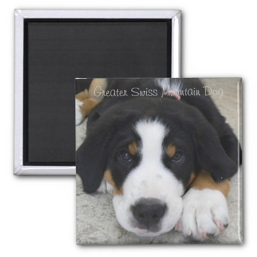 Greater Swiss Mountain Dog Magnet