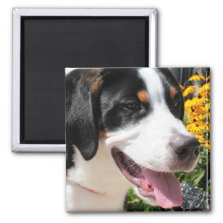 Greater Swiss Mountain Dog Marley 4 Magnet