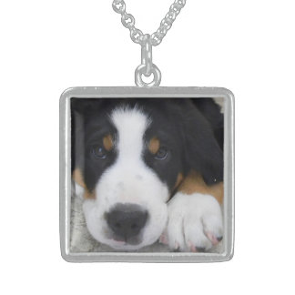 Greater Swiss Mountain Dog Necklace