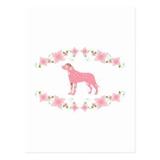 Greater Swiss Mountain Dog Postcard