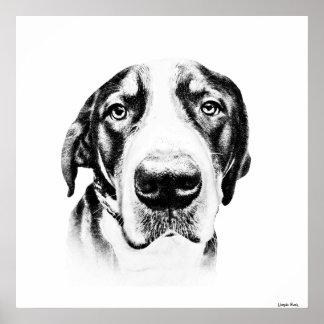 Greater Swiss Mountain Dog Print