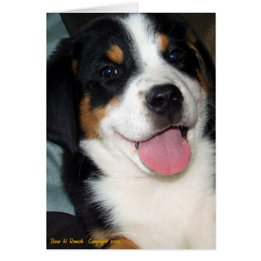 Greater Swiss Mountain Dog Puppy Greeting Cards