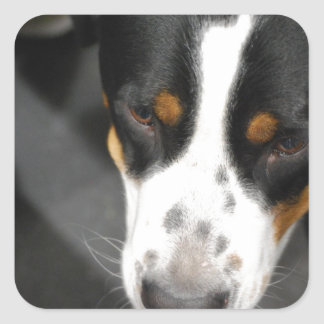 Greater Swiss Mountain Dog Puppy Stickers
