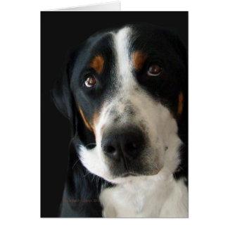 Greater Swiss Mountain Dog Sad Eyes Greeting Card