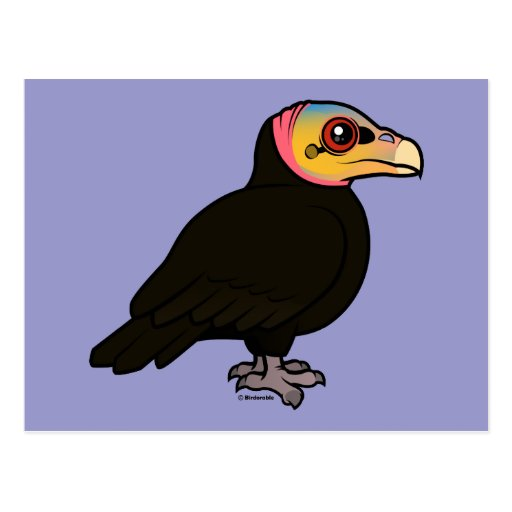 Greater Yellow-headed Vulture Postcard