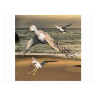 Greater Yellowlegs Postcard