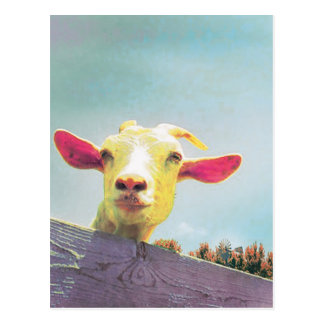 Greatest of All Time pink eared goat Postcard