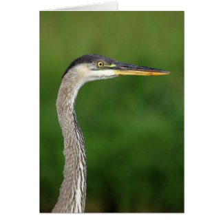Greating card - Great blue heron portrait