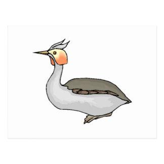 Grebe Bird Postcard