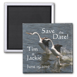Grebe Birds Wildlife Animal Save the Date 2 Inch Square Magnet