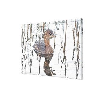 Grebe Birds Wildlife Animals Photography Canvas Print
