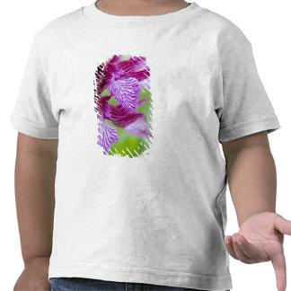 Grecia, Creta. Orquídea de mariposa en la Camiseta