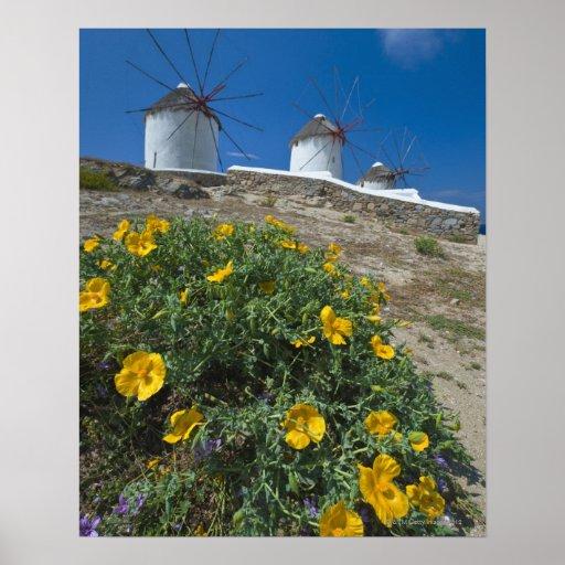 Grecia, islas de Cícladas, Mykonos, florece cerca Impresiones