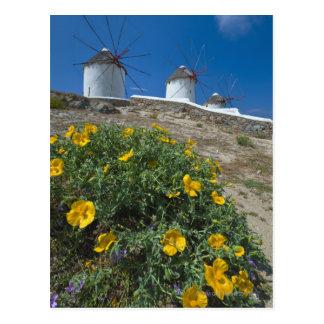 Grecia, islas de Cícladas, Mykonos, florece cerca Postal