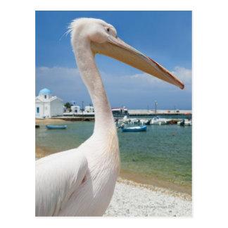 Grecia, islas de Cícladas, Mykonos, pelícano Postal