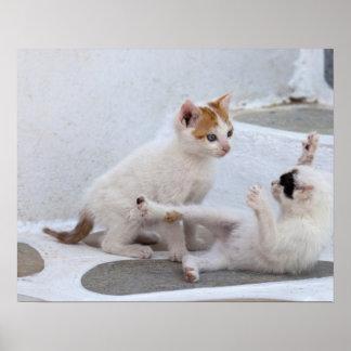 Grecia Mykonos el jugar de los gatitos Poster