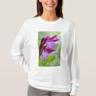 Greece, Crete. Butterfly orchid in bloom T-Shirt