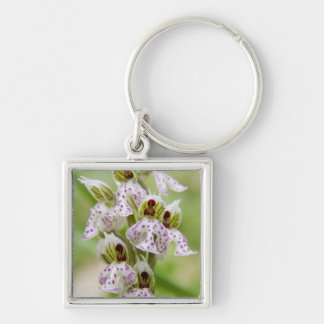 Greece, Crete. Orchid in bloom Orchis Keychain