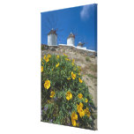 Greece, Cyclades Islands, Mykonos, Flowers near Canvas Print