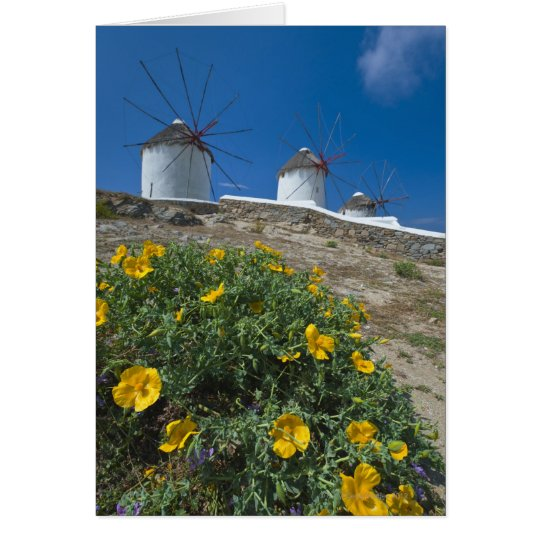 Greece, Cyclades Islands, Mykonos, Flowers near Card