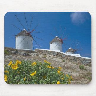 Greece, Cyclades Islands, Mykonos, Flowers near Mousepad