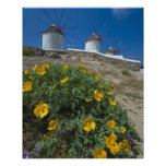 Greece, Cyclades Islands, Mykonos, Flowers near Poster