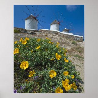 Greece, Cyclades Islands, Mykonos, Flowers near Poster