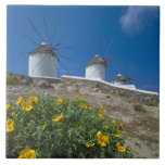 Greece, Cyclades Islands, Mykonos, Flowers near Large Square Tile