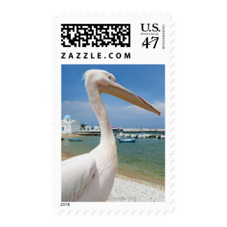 Greece, Cyclades Islands, Mykonos, Pelican on Postage Stamp
