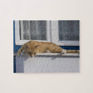 Greece, Mykonos. Curious orange tabby cat looks Jigsaw Puzzle