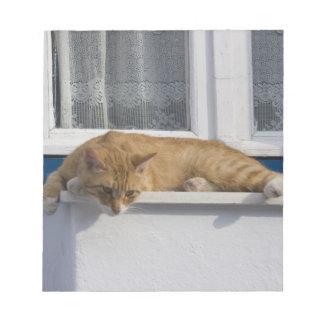 Greece, Mykonos. Curious orange tabby cat looks Notepad