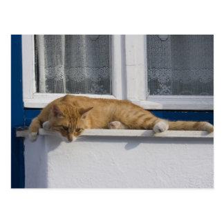 Greece, Mykonos. Curious orange tabby cat looks Postcard