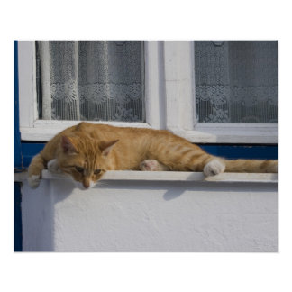 Greece, Mykonos. Curious orange tabby cat looks Poster