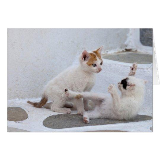 Greece, Mykonos, Kittens playing. Card