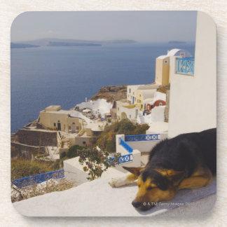 Greece, Santorini Island, Oia City, dog sleeping Drink Coasters