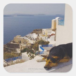 Greece, Santorini Island, Oia City, dog sleeping Square Sticker
