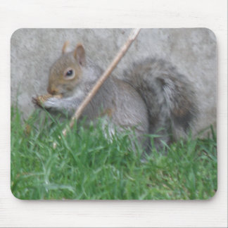 Greedy Gray Squirrel Mousepad