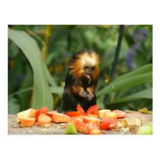 Greedy Monkey Postcard