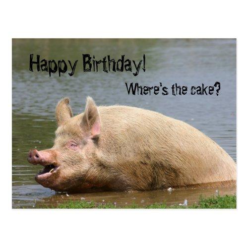Greedy pig Birthday Postcard