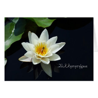 Greek sympathy card with white waterlily